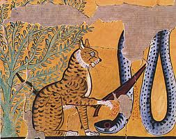 cat cutting apophis