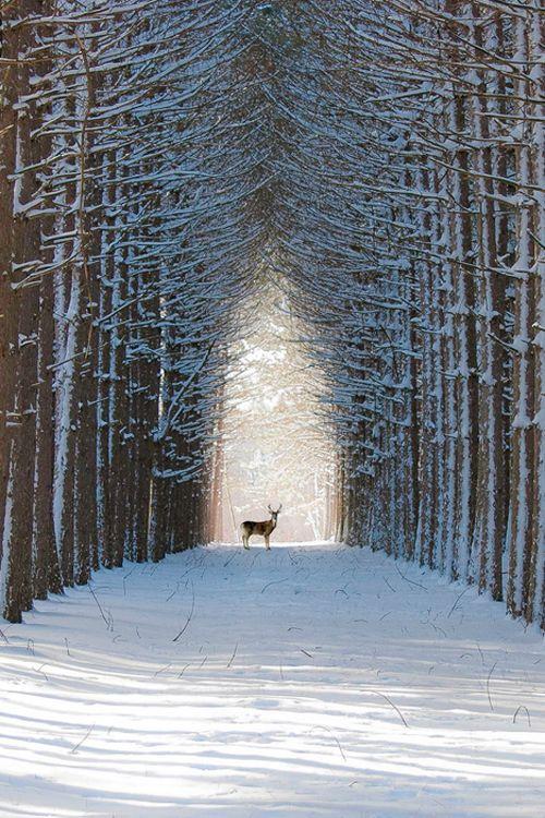 deersnowtrees